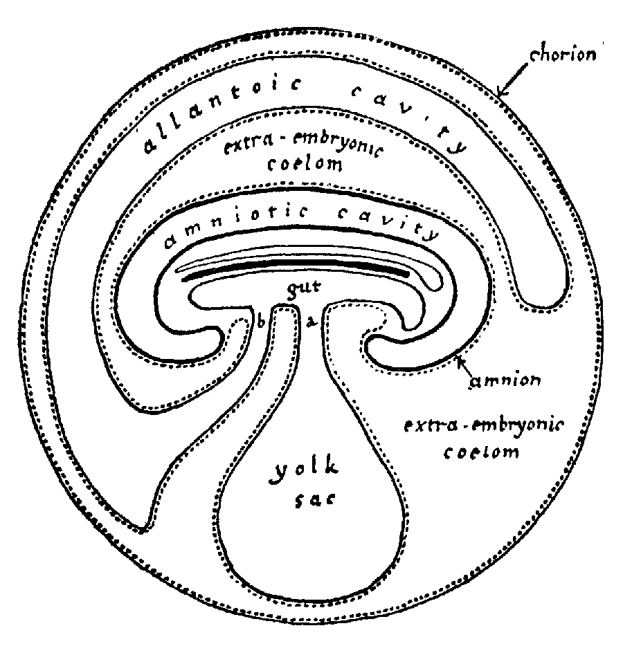 Aristotle  Generation Of Animals